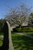 Grundstein und Blüten stockfotografie