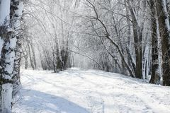 Grundstraße im Winterwald, schöne wilde Landschaft mit Schnee und blauer Himmel, Naturkonzept Stockfotos