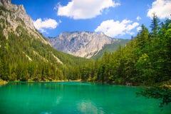 Gruner voient le lac Photos libres de droits