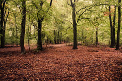 Grunewald Forest, Berlin, Germany. Trees and red leafs along the Grunewald forest in Berlin, early in the morning Stock Photo
