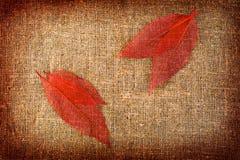 Grunge与叶子的秋天背景在画布 免版税库存照片