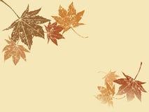 grunge叶子槭树 免版税库存照片
