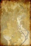 grunge叶子纸张 库存图片