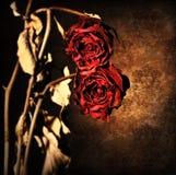 Grunge枯萎了玫瑰边界 免版税库存图片