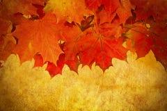 Grunge红色秋叶框架 图库摄影