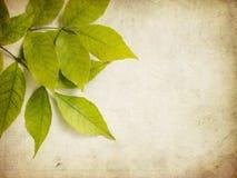 Grunge绿色叶子 免版税库存照片