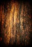 grunge老纹理木头 库存例证