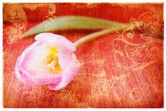grunge页粉红色郁金香 免版税图库摄影