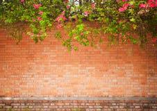 Grunge ściana Obrazy Stock