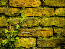 Grunge ściana z cegieł Obraz Royalty Free