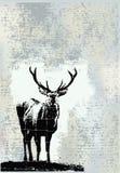 grunge αρσενικό ελάφι Στοκ εικόνες με δικαίωμα ελεύθερης χρήσης