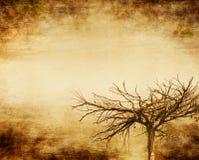 grunge δέντρο στοκ εικόνες