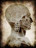 grunge κεφάλι απεικόνιση αποθεμάτων