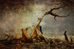 grunge παλαιό δέντρο Στοκ Εικόνες