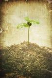 grunge φυτό Στοκ Εικόνες