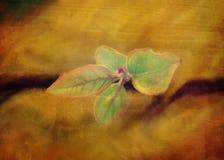 grunge φύλλο watercolor Στοκ φωτογραφία με δικαίωμα ελεύθερης χρήσης