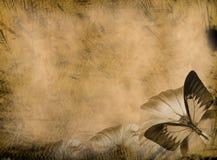 grunge бабочки предпосылки Стоковая Фотография