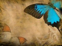 grunge бабочки предпосылки Стоковая Фотография RF