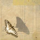grunge бабочки предпосылки бесплатная иллюстрация
