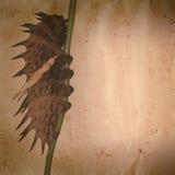 Grunge гусеницы бабочки старое Стоковое Изображение RF