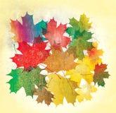 Grunge кленовых листов Стоковое фото RF