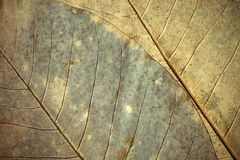 grunge листва предпосылки Стоковая Фотография