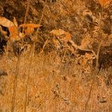 grunge предпосылки искусства флористическое Стоковые Фотографии RF