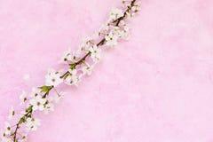 grunge предпосылки флористическое Стоковое Фото