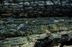 grunge Сгорели деревянная текстура Черная предпосылка Стоковые Фотографии RF
