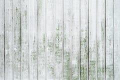 Grunge слезая белизну покрасил предпосылку доск дуба с мхом Стоковые Фотографии RF