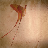 Grunge сумеречницы бабочки длиннего кабеля старое Стоковые Изображения