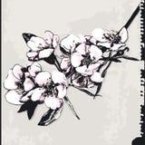grunge цветения предпосылки яблока Стоковое Изображение