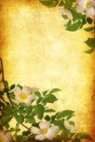 Grunge цветет предпосылка бесплатная иллюстрация