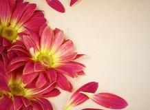 grunge цветка предпосылки флористическое Стоковые Фото