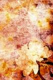 grunge цветка предпосылки Стоковые Изображения RF