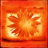 grunge цветка предпосылки Стоковое Фото