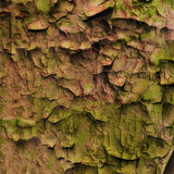 Grunge 004. Old red mossy grungy wall Royalty Free Stock Photo
