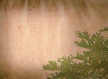 Grunge листьев зеленого цвета природы весны старое Стоковые Изображения RF