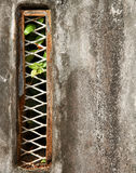 Текстура предпосылки стены Grunge Стоковое Фото