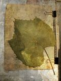 Grunge abstract background with grape leaf Stock Photography