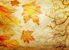 Grunge abstract fall background Stock Images