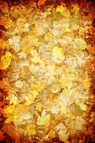 Grunge abstract golden leaf texture background Royalty Free Stock Images
