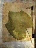 Grunge abstrakter Hintergrund mit Traubenblatt vektor abbildung