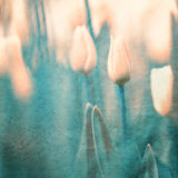 Grunge artistic tulips background Royalty Free Stock Photography