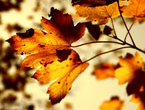 Grunge autumn Stock Photo