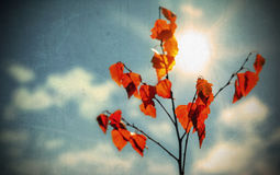 Grunge autumn background Stock Photo