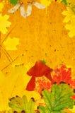 Grunge autumn background stock image