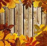 Grunge autumn background Royalty Free Stock Photos