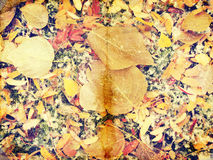 Grunge autumn background with dead leaves Royalty Free Stock Images