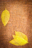 Grunge autumn background with leaves on canvas Royalty Free Stock Images